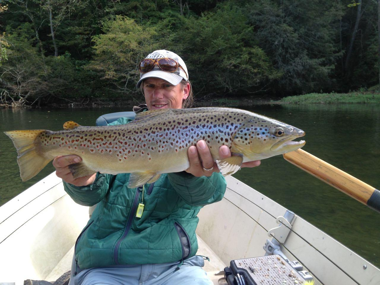 South holston river brown trout riverstone fly fishing for Brown trout fly fishing
