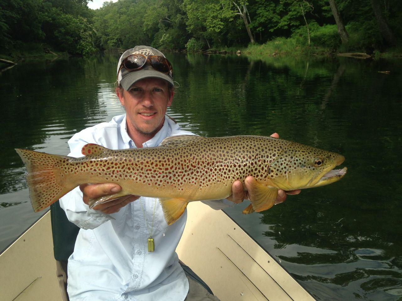 South Holston Brown Trout Riverstone Fly Fishing